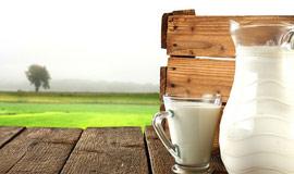 Milch- & Fleischverarbeitung-